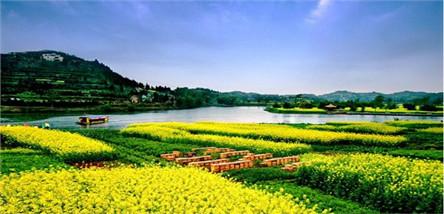 潼南崇龛油菜花、双江古镇一日游