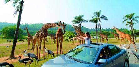 重庆到广州长隆野生动物园、欢乐世界、珠海海