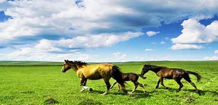 重庆到内蒙古(希拉穆仁大草原、银肯响沙湾)