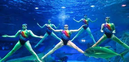 壁纸 海底 海底世界 海洋馆 水族馆 444_214