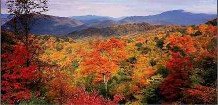 重庆到光雾山看红叶、阆中滕王阁三日游