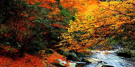 光雾山看红叶、滕王阁跟团三日游
