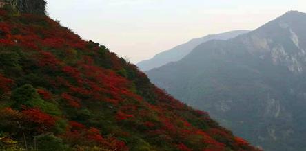 巫山国际红叶节神女天路、长寿古镇2日游